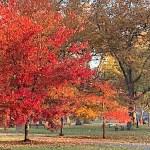 'Oaktoberfest' Celebrates Every Branch of Tree Care