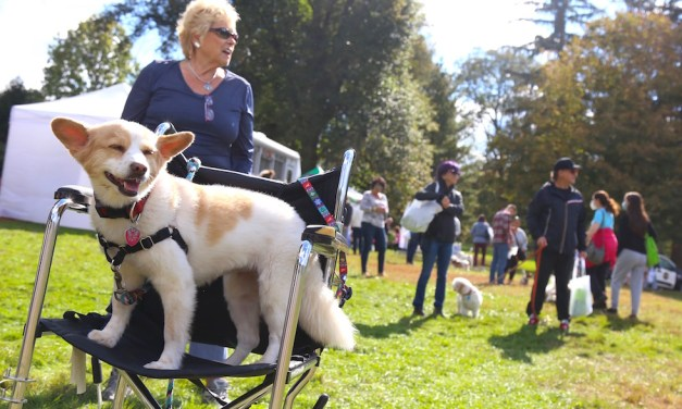 Sunday's Dog Fest Gets Tails Wagging