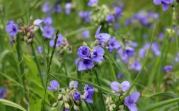 Crosby Meadow Flower5