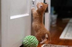 hallway c I want to visit the big kitties