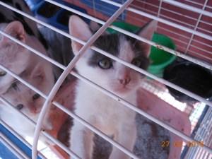 kitten-rescue-2
