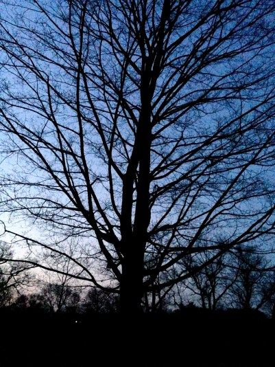 As light gradually grew, birdsong was all around, and lovely silhouetted trees.