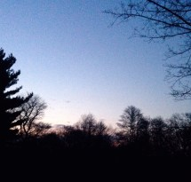 A hint of sunrise in the distance, as we listen to sparrows, chickadees and gnat-catchers.