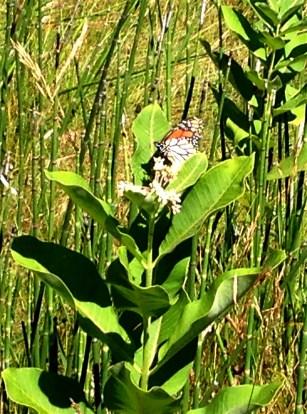 saw quite a few monarchs