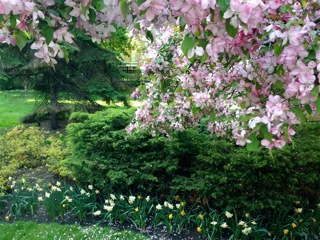 blossoms & blooms at Osgoode Hall