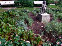 Cherub herb and chard garden, surrounded by lantana.
