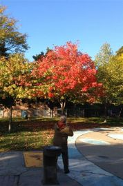 Marion captures a photo of the brightest tree in Art Eggleton Park.