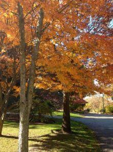 Beautiful nectarine coloured leaves.