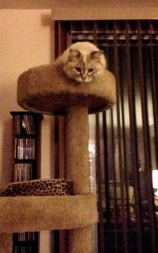 This queen of the castle is our nephew's cat, Macey. Very pretty!!! (And don't even think about messing with her!!! hissssssssssss!)