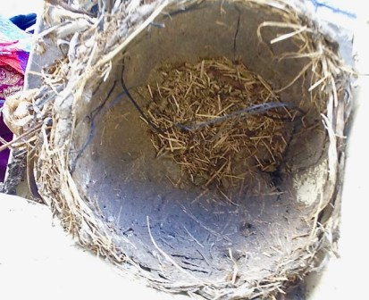 ... but the nest was empty. So far.