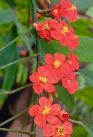 Allan Gardens - tiny blooms