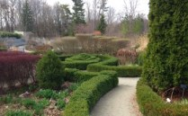 pretty hedging at Edwards Gardens