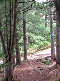a forest trail, from Helena's walk in Gravenhurst