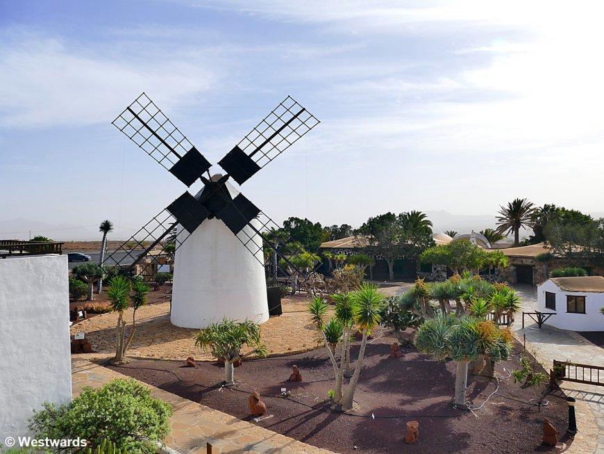Windmill on Fuerteventura
