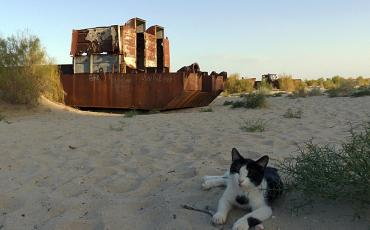 Rusty ship wreck in the desert with a cat in the foreground