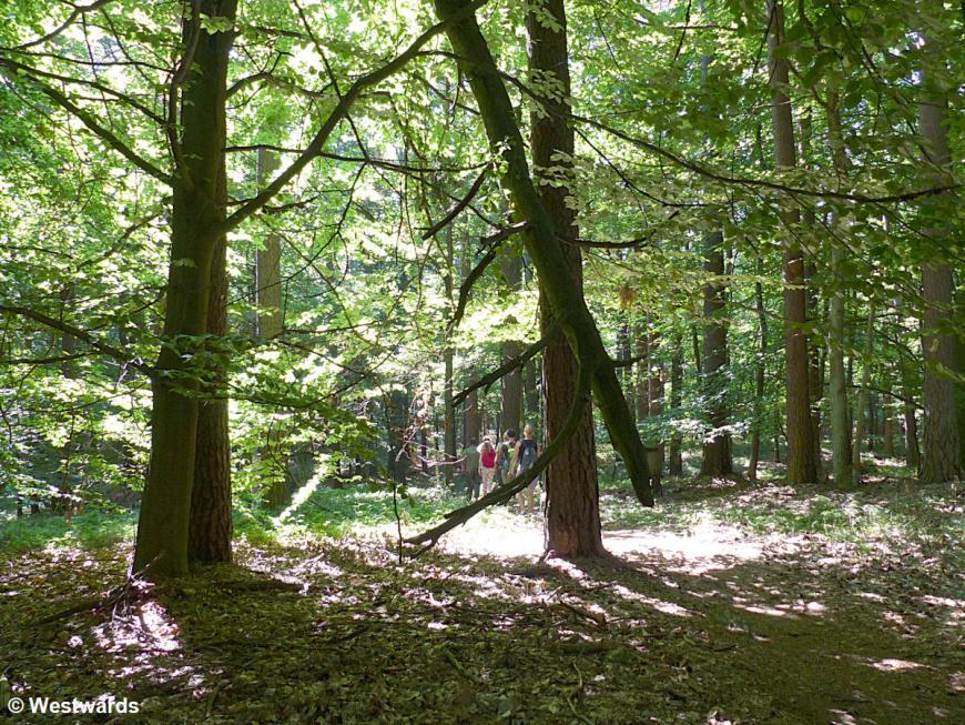 20140719 Serrahn Buchenwald P1100251