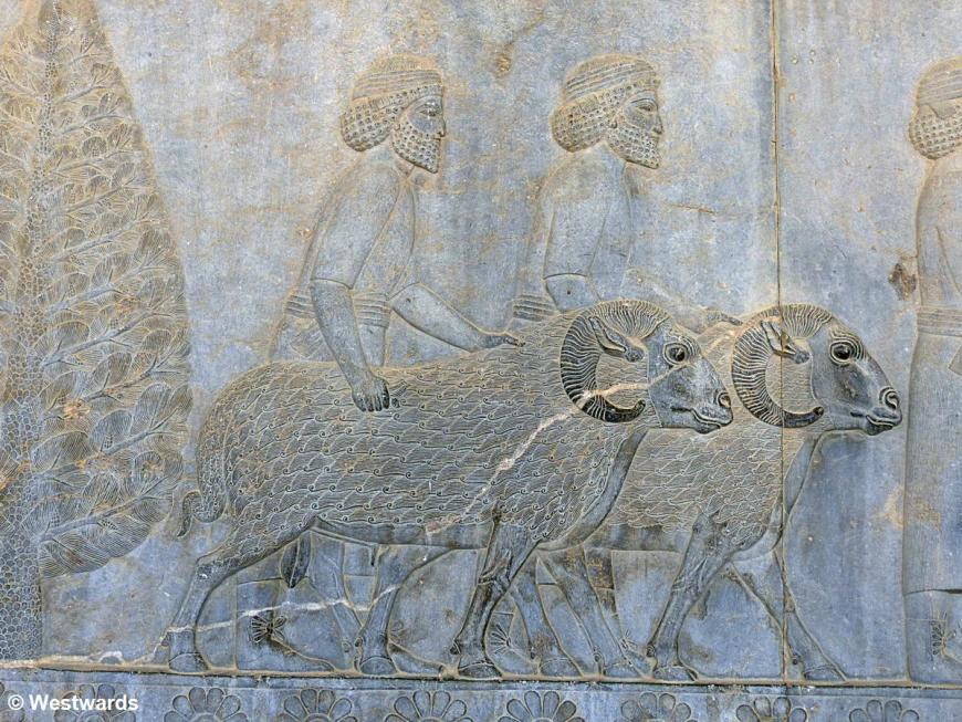 Relief of Assyrians visiting Persepolis with rams