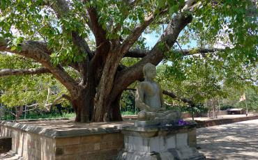 Meditating Buddha under a tree
