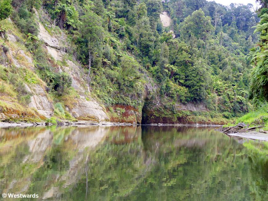 20190212 Whanganui River day3 P1620838