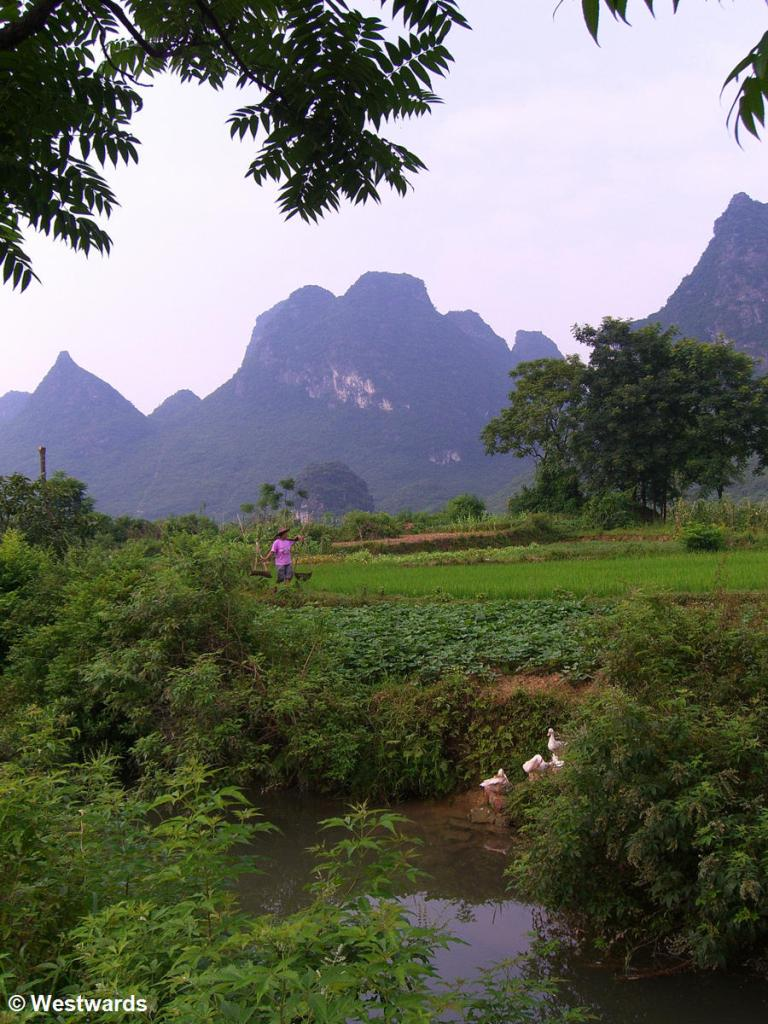Landscape with rice paddys and mountains in Yangshuo