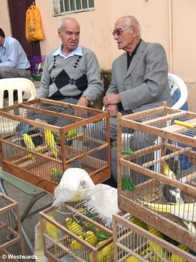 Songbird vendors in the bazaar, Old Town of Baku
