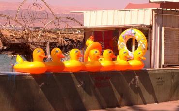 Swim gear in Aqaba