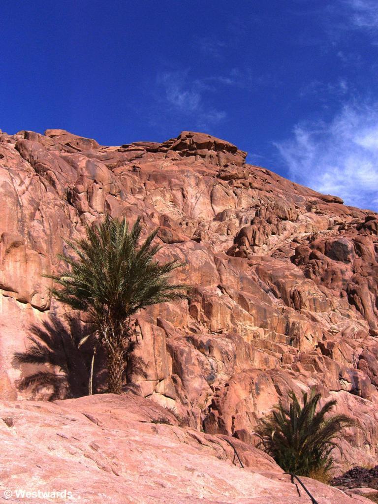 20070311 Sinai Trekking3