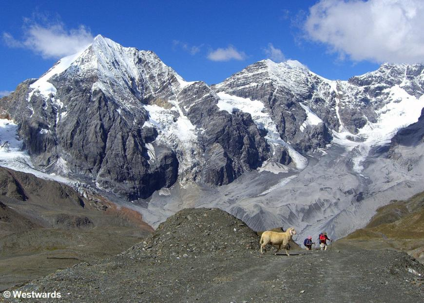 20070812 Sulden Ortlergruppe mit Schaf