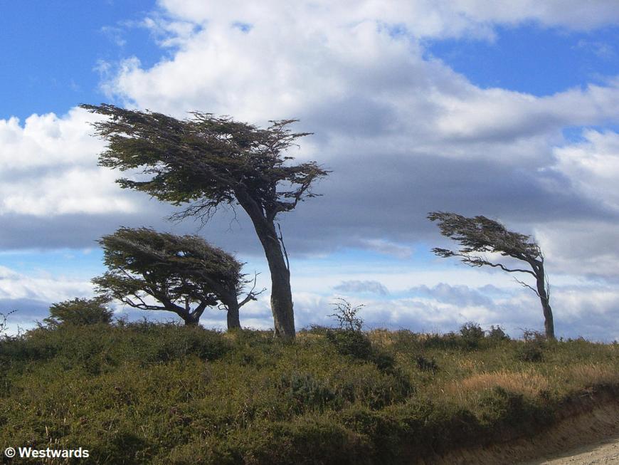trees near Estancia Harberton
