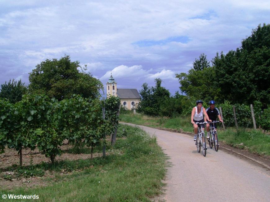 cyclists near Lake Neusiedel