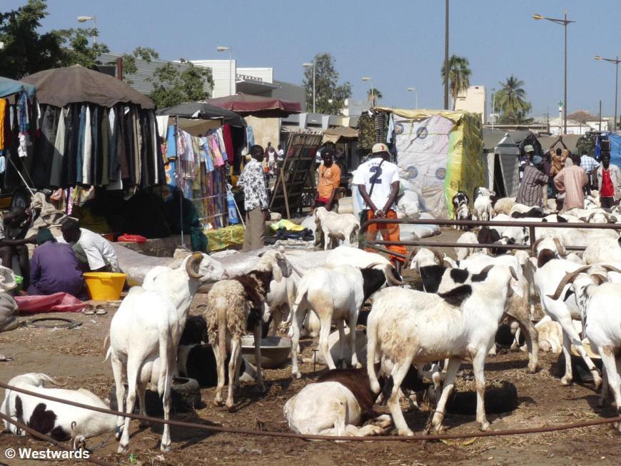 goats in a Dakar market