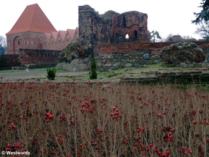 ruined castle in Torun, like Malbork a former crusader castle