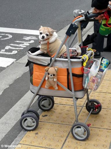 20100420 Tokyo Fashion dog 1140279