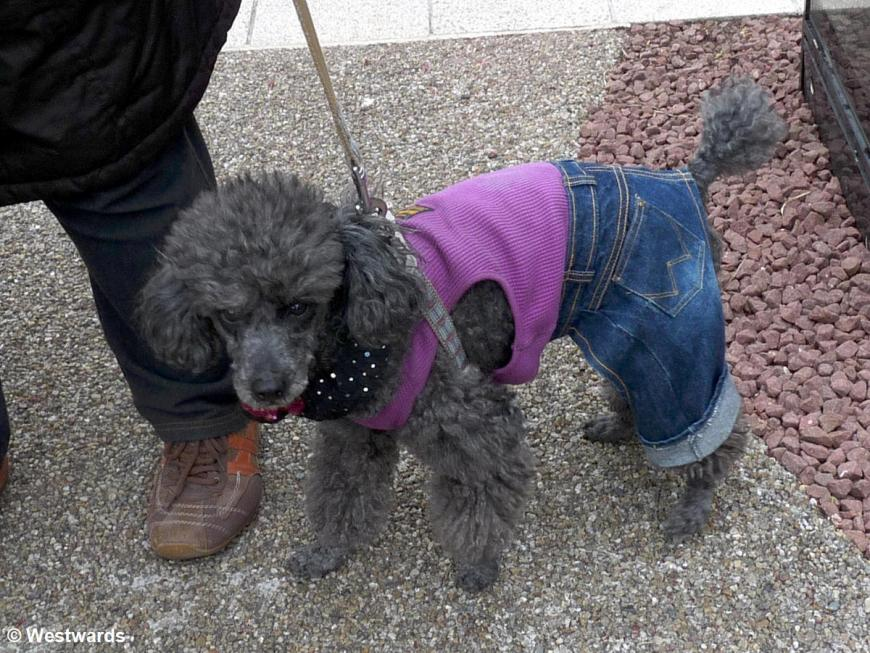 20100420 Tokyo Jeans dog Kuro 1140268