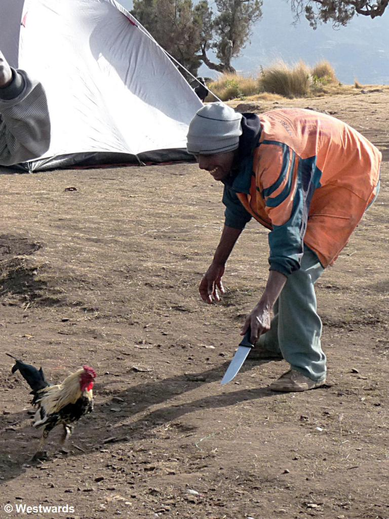 Cook with live chicken on a Simien Mountain campsite