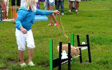 visitors at Malmö rabbit jumping contest