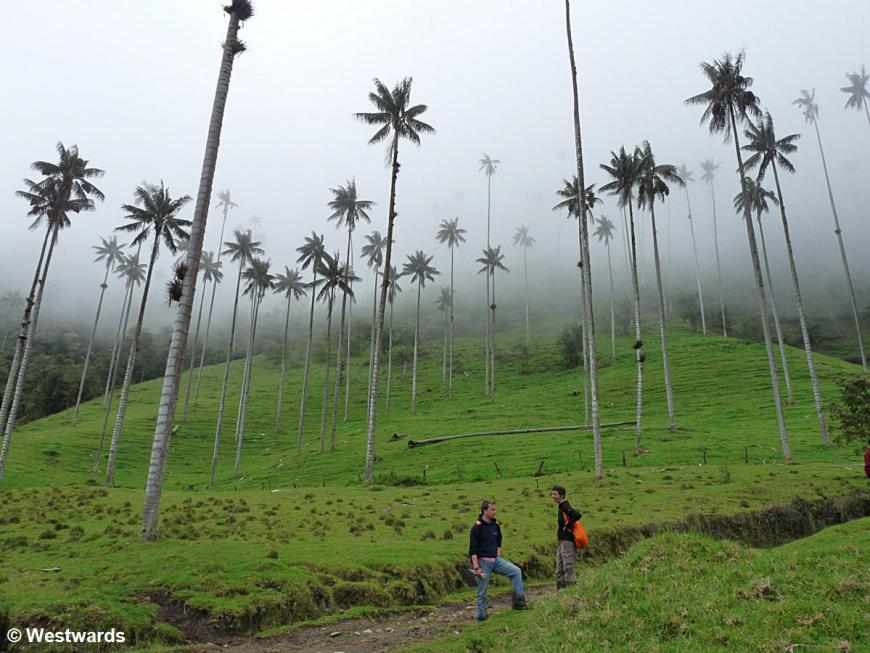 20120124 Valle de Cocora 1310458