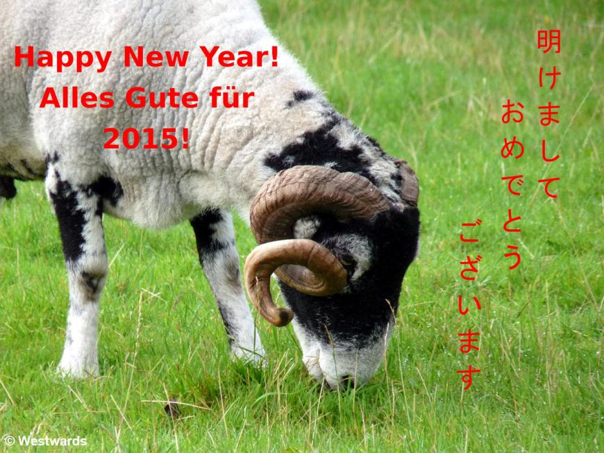 2015 New year's card with sheep
