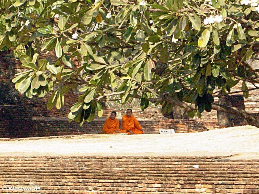 monks below trees in Thailand