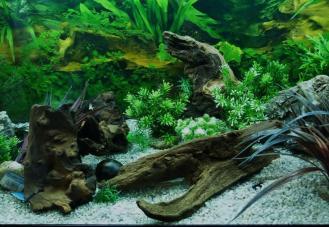 Aquarium - BW