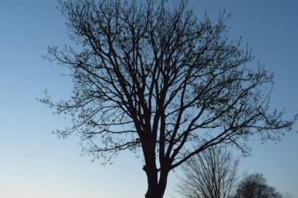 Tree at 10:00pm