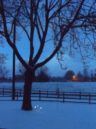 Night Time Tree