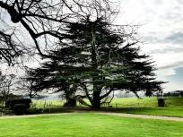 Tree. 03. Impressive art