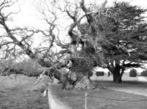 Tree. 04. Silky mono