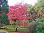 Autumn 3 VH