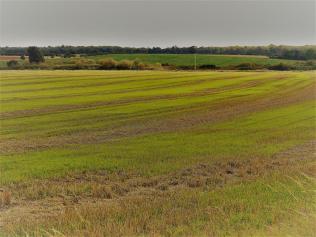 BW.-01.-fields-in-zeke