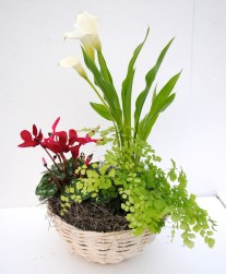 flowering tropical plant arrangement