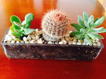glass succulent arrangement