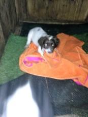 Ellie with her blanket