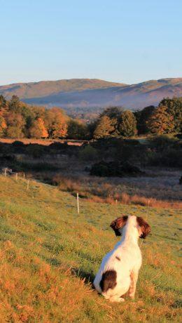 Ellie in Autumn